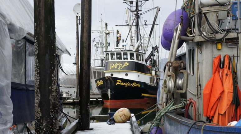 Commercial Fishing Photo Of The Day | F/V Pacific Belle | Harris Harbor
