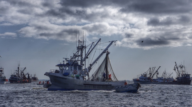 Commercial Fishing Photo Of The Day | F/V Star Shadow | Sitka Herring 2013