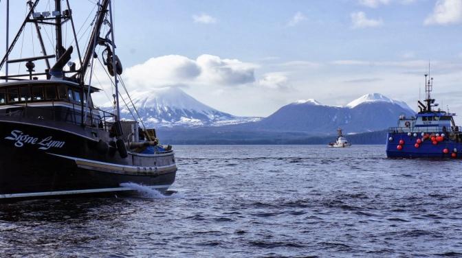 Commercial Fishing Photo Of The Day | F/V Signe Lynn | Sitka Herring 2013