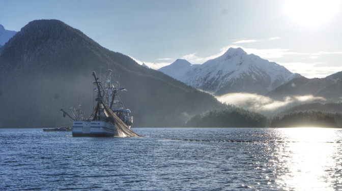 Commercial Fishing Photo Of The Day | F/V Optimus | Sitka Herring 2014