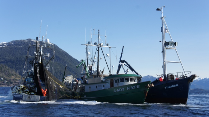 Commercial Fishing Photo Of The Day | F/V Island Pride | Sitka Herring 2014