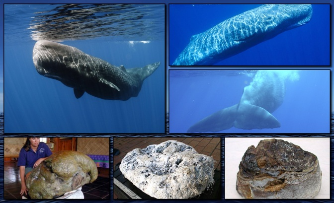 Internet ByCatch | Ambergris | The Weird Gift Of Whales