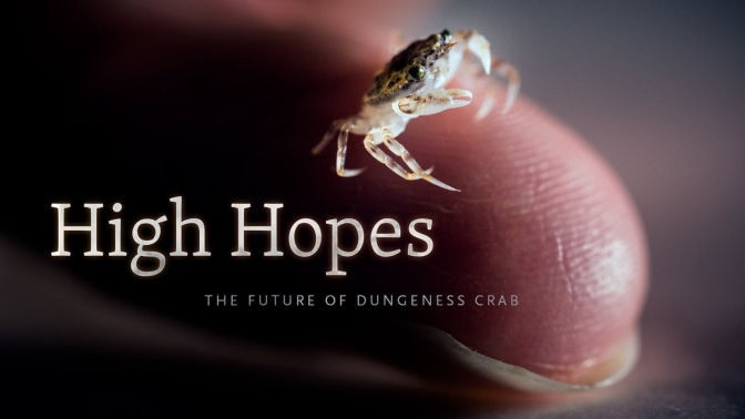 Commercial Fishing Video Of The Day | High Hopes – The Future Of Dungeness Crab